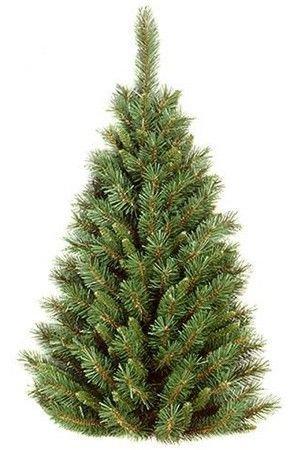 Искусственная елка настенная ТИФФАНИ, 122 см, National Tree Co 31TF40HT/TF-40HХвойный декор National Tree<br>Настенные елочки - яркий штрих новогоднего интерьера! Название этой элегантной елочки отражает ее суть: ель можно подвесить на любую плоскую поверхность. Очевидное ее преимущество в том, что разместить такую ель можно в любом, даже самом тесном помещении. Елочка ТИФФАНИ составлена из пушистых отростков благородно-зеленого цвета с искусственной хвоей разной длины. Прекрасная имитация хвои настоящей лесной красавицы.  И в офисе, и в доме, и в торговом зале магазина она подарит радость новогоднего праздника. <br> <br>Высота :- 122 см<br>Количество отростков - 201<br>Нижний диаметр - 69 см;<br>Хвоя - трехслойное PVC<br>Диаметр отростков - 2,5 и ,5 см<br>Декор - хвойные веточки различного диаметра<br> <br>Производитель: National TREE COMPANY, Cranford, New Jersey, USA<br>Производство размещено в Гонконге<br>