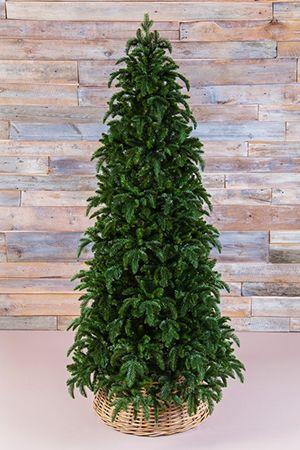 Искусственная ель НОРМАНДИЯ СТРОЙНАЯ  (литая хвоя РЕ+PVС), 1,55 м темно-зеленая, Triumph Tree 73011Ели до 1,55 м Triumph<br>Ель НОРМАНДИЯ стройная - самое роскошное искусственное дерево, которое можно себе представить! <br>Эта ель великолепна благодаря материалу, из которого изготовлена ее хвоя. Упругая, мягкая, не теряющая своей формы, необыкновенно приятная на ощупь хвоя изготовлена из формованного пластика высочайшего качества. Такую хвою называют литьем, поскольку каждая веточка выливается целиком в специальных формах. В поперечном разрезе хвоинки имеют круглую форму, такую же, как хвоинки натуральной ели. Визуально хвоя НОРМАНДИИ неотличима от настоящей. Ель НОРМАНДСКАЯ уникальна по своей красоте. Смотришь на нее и удивляешься, насколько искусно выполнены все ее детали, насколько похожа эта ель на натуральное дерево. Это роскошное новогоднее дерево будет уместно на любом празднике и, безусловно, такой ели будут рады в каждом доме!<br>Модель НОРМАНДИЯ стройная отличается от обычной большей компактностью: у нее меньше диаметр нижнего яруса веток (на 30 см), меньшее количество веточек и, соответственно, более низкая цена. Мы рекомендуем приобретать эту модель тем, кто планирует поставить ель в небольшой по площади комнате.Высота ели: 1,55 м Нижний диаметр - 0,91 м <br>Количество веточек - 922<br>Хвоя - литье (РЕ) + трехслойное PVC (внутренние пристволовые части и ствол)<br>Длина иглы - 1,5 см (литье), 2-2,5 см (PVC).<br>Цвет: темно-зеленыйНа фотографии может быть изображена искусственная ель этой модели, но другого размера.Ель поставляется в коробках из плотного картона, предполагающих многолетнее хранение. Собирается ель быстро, благодаря цветной маркировке веток и точек крепления. Имеет металлическую подставку, обеспечивающую устойчивость. Ель сертифицирована по европейским стандартам качества и безопасности.Ель производится фирмой TRIUMPH TREE, Голландия, изготавливается в Тайланде Производители дают гарантию 10 лет на все ели TRIUMPH.Ели TRIUMPH входят в число
