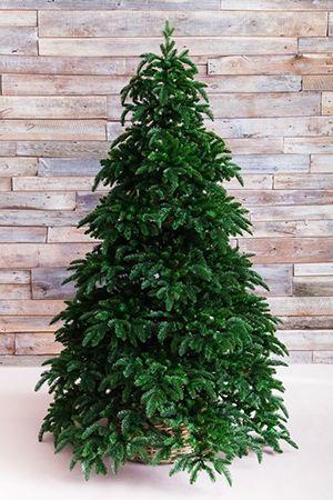 Искусственная ель НОРМАНДИЯ  (литая хвоя РЕ+PVС), 2,15 м темно-зеленая, Triumph Tree 73407Ели 1,95-2,15 м Triumph<br>Ель НОРМАНДИЯ - самое роскошное искусственное дерево, которое можно себе представить! <br>Эта ель великолепна благодаря материалу, из которого изготовлена ее хвоя. Упругая, мягкая, не теряющая своей формы, необыкновенно приятная на ощупь хвоя изготовлена из формованного пластика высочайшего качества. Такую хвою называют литьем, поскольку каждая веточка выливается целиком в специальных формах. В поперечном разрезе хвоинки имеют круглую форму, такую же, как хвоинки натуральной ели. Визуально хвоя НОРМАНДИИ неотличима от настоящей. Ель НОРМАНДСКАЯ уникальна по своей красоте. Смотришь на нее и удивляешься, насколько искусно выполнены все ее детали, насколько похожа эта ель на натуральное дерево. Это роскошное новогоднее дерево будет уместно на любом празднике и, безусловно, такой ели будут рады в каждом доме!Высота ели: 2,15 м Нижний диаметр - 1,55 м <br>Количество веточек - 2647Хвоя - литье (РЕ) + трехслойное PVC (внутренние пристволовые части и ствол)<br>Длина иглы - 1,5 см (литье), 2-2,5 см (PVC).<br>Цвет: темно-зеленыйНа фотографии может быть изображена искусственная ель этой модели, но другого размера.Ель поставляется в коробках из плотного картона, предполагающих многолетнее хранение. Собирается ель быстро, благодаря цветной маркировке веток и точек крепления. Имеет металлическую подставку, обеспечивающую устойчивость. Ель сертифицирована по европейским стандартам качества и безопасности.Ель производится фирмой TRIUMPH TREE, Голландия, изготавливается в Тайланде Производители дают гарантию 10 лет на все ели TRIUMPH.Ели TRIUMPH входят в число лидеров рождественских продаж во многих странах Европы.<br>